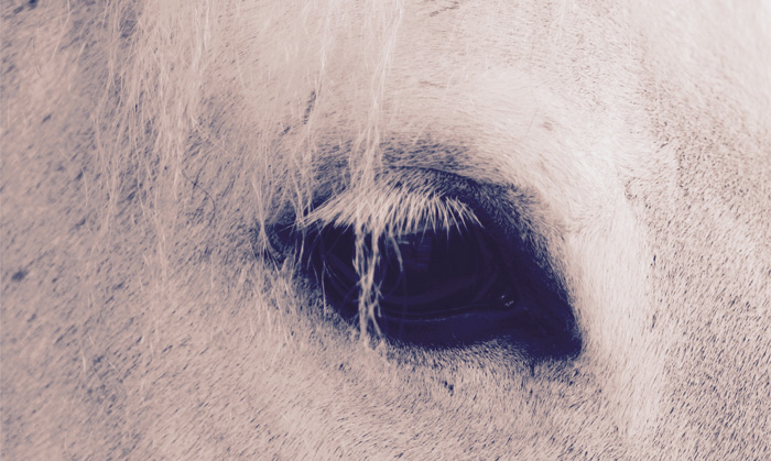 hekima le concept illustration cheval